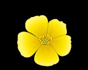 BC-logo-small.png